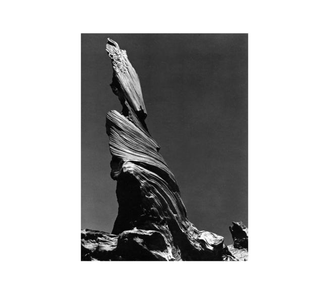 Edward Weston, 'Driftwood Stump', 1937, Weston Gallery