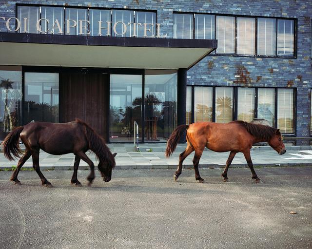 , 'Miyazaki, Toi Cape Hotel,' 2016, andriesse eyck galerie