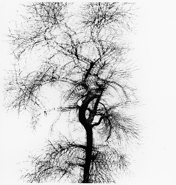 , 'Multiple exposure tree,' 1956, SAGE Paris