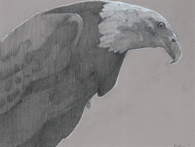 , 'Bald Eagle 1,' , Dowling Walsh