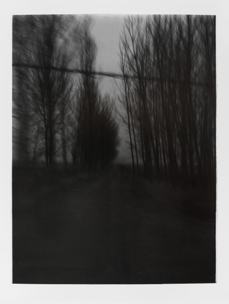 , 'Lost Souls - Winter Poplar Trees 迷途-冬天的杨树,' 2013, Star Gallery