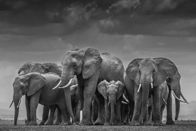 David Yarrow, 'The Circle Of Life II', 2015, Maddox Gallery