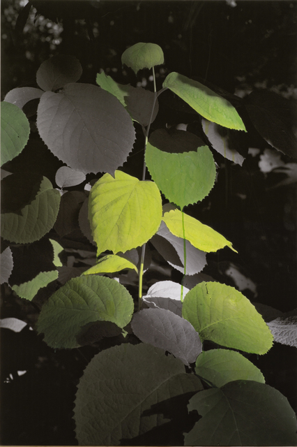 , 'Study of Green - Wide Leaf,' 2012, ONE AND J. Gallery