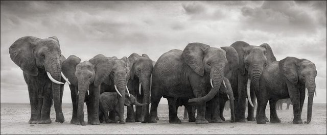 , 'Elephant Group on bare earth, Amboseli,' 2008, Bernheimer Fine Art
