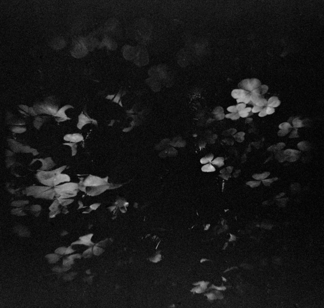, 'Primal Wild 5,' 2014, Silo118