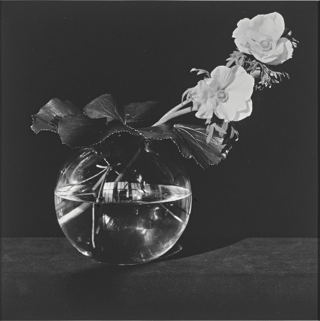 Robert Mapplethorpe, ''Anemone'', 1982, Sotheby's