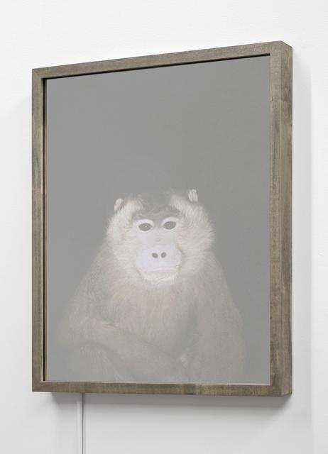 , 'Pig-tailed Macaque (Macaca nemestrina),' 2016, EUQINOM Gallery