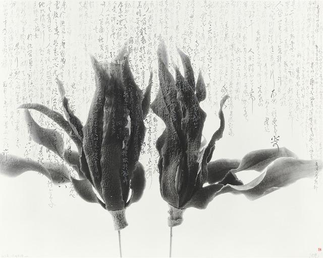 , '白蘭花 - 莎士比亞 - 銀,' 2010-2017, Ipreciation