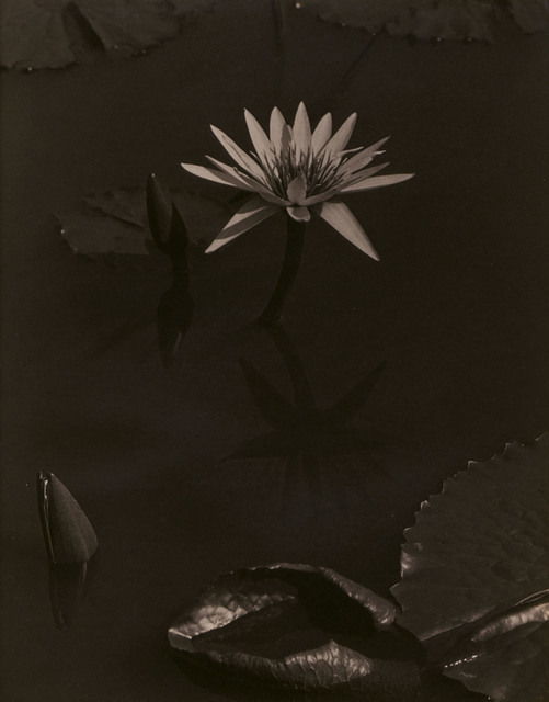 , 'The Lily, Mount Kisco,' 1918-1919, Edwynn Houk Gallery
