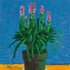 David Hockney Chair Portraits
