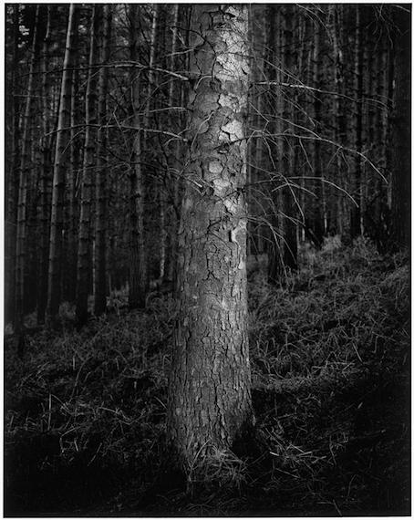 Paul Hart, 'Warrior', 2007, The Photographers' Gallery | Print Sales