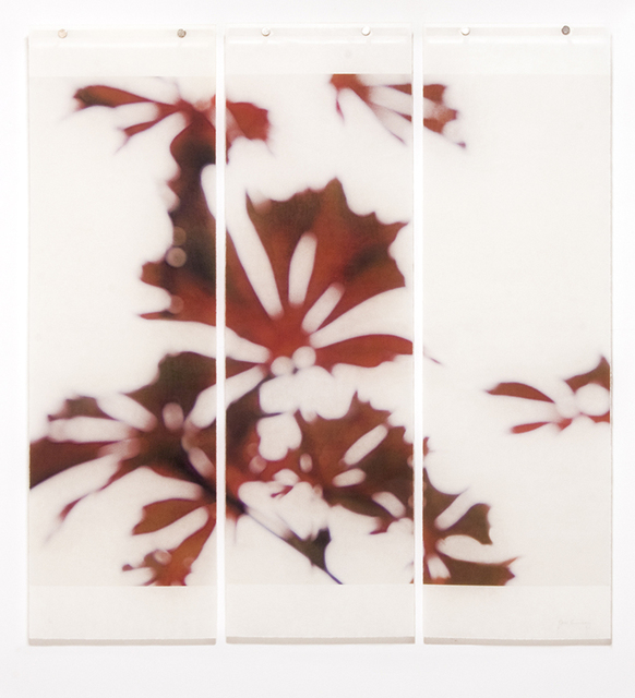Jeri Eisenberg, 'Momji No. 1', 2014, Kathryn Markel Fine Arts