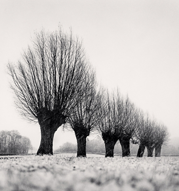 Michael Kenna, 'Seven Pollarded Trees, Capaize, Bourgogne, France', 1998, PDNB Gallery