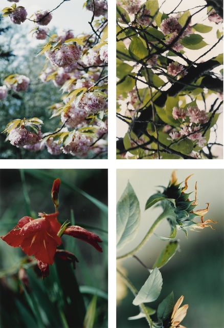 Thomas Struth, 'Pflanzen, Nr. 22, 35, 67 and 70', 1992-93, Sotheby's
