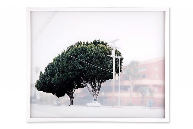 , 'ficus #6 [w. temple st. at n. vendome st.],' 2009, ROSEGALLERY