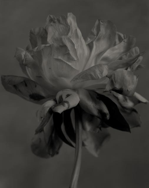 Yumiko Izu, 'Secret Garden Noir 8', 2004, Howard Greenberg Gallery