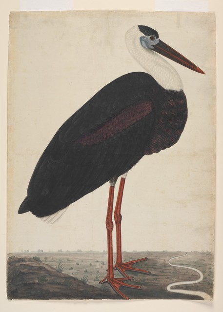 Unknown Artist, 'Black Stork in a Landscape', ca. 1780, The Metropolitan Museum of Art
