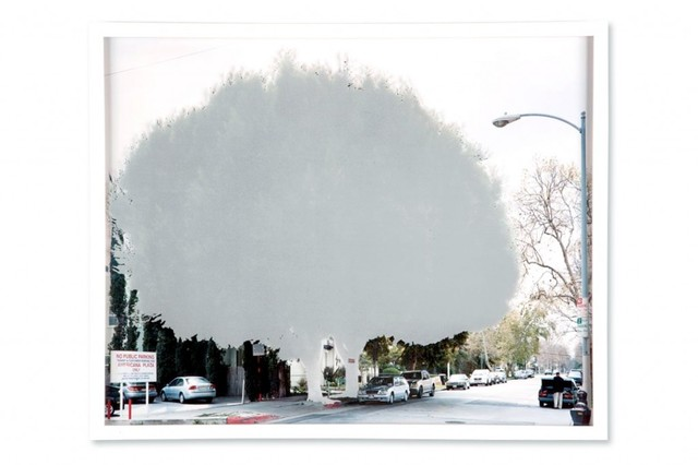 , 'ficus  [s. dunsmuire ave. at wilshire blvd.] ,' 2009, ROSEGALLERY