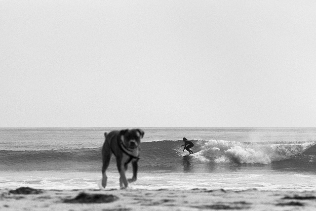 , 'Kyle and Dog,' 2013, Danziger Gallery