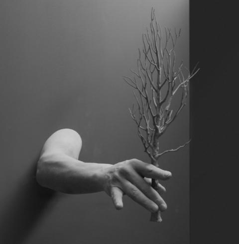 , 'Gesture (tree),' 204, Galerie Krinzinger