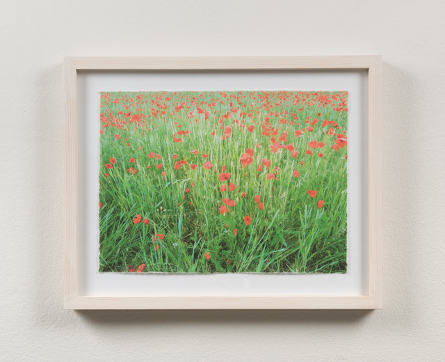 , 'Poppies #3,' 2015, Martin Asbæk Gallery