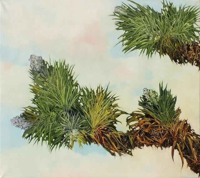 Robert Dunahay, 'Joshua Tree Branches', 2012, HOHMANN