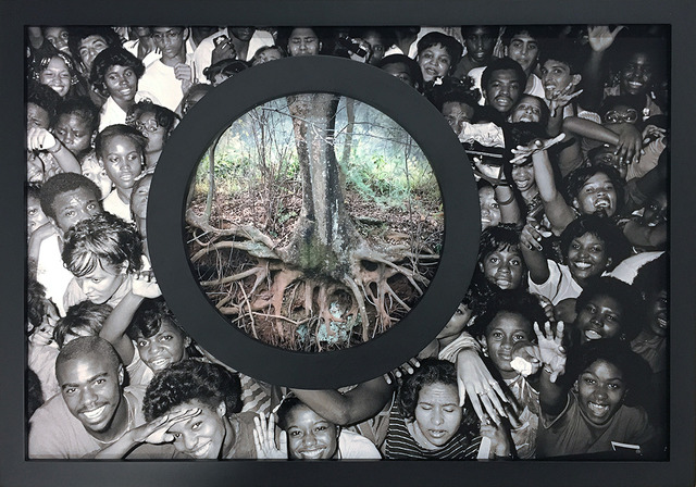 , 'Flora Africanus (D.C.) (Study),' 2017, Gallery MOMO