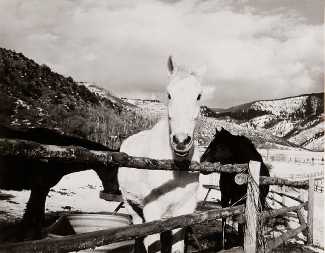 Andy Warhol, 'Andy Warhol, Photograph of Horses in Aspen, 1980s', 1980s, Hedges Projects