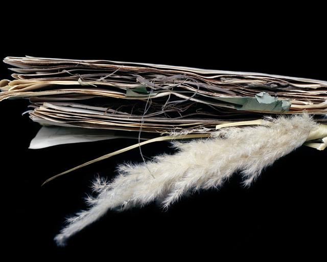 , 'Cortaderia selloana, Poaceae,' 2012, heliumcowboy
