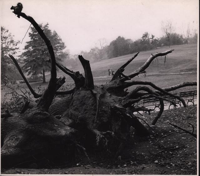 André Kertész, 'Central park', 1944, Grob Gallery
