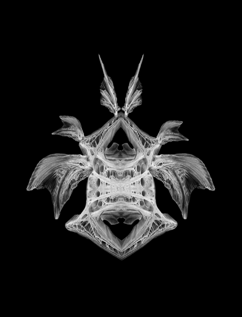 , 'X-Ray: Denizen,' 2018, ArtHelix Gallery