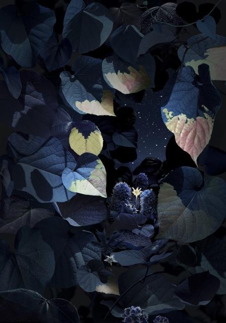 Ruud Van Empel, 'Floresta Negra #6', 2018, Huxley-Parlour