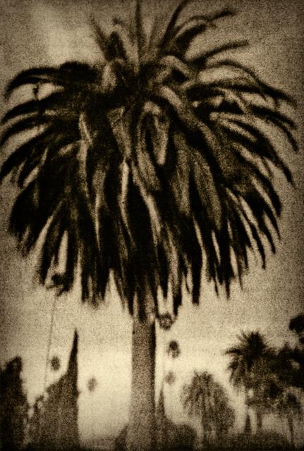 , 'Palm Tree,' , Galerie Clémentine de la Féronnière