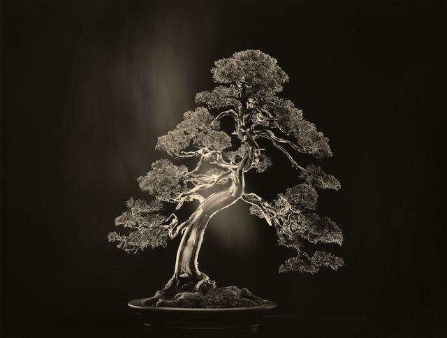 Yamamoto Masao, 'Bonsai #4000', 2018, Robert Koch Gallery