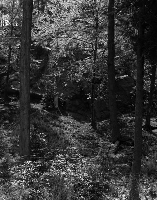 , 'Arboretum,' 1968, Dedee Shattuck Gallery