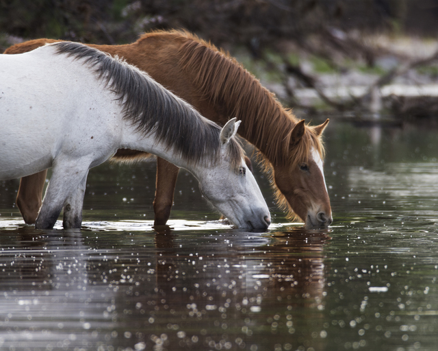 , 'Salt River Wild Horses In River,' 2017, Bitfactory Gallery