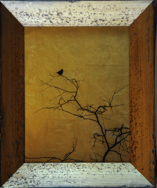 , 'Single Bird in Tree [Ref. #48],' 2015, Catherine Edelman Gallery