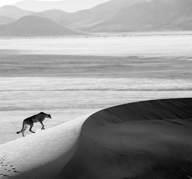 David Yarrow, 'Prowl', 2013, Holden Luntz Gallery