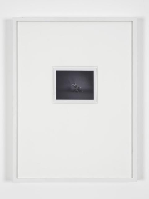 , 'Polaroids (SX-70) (plastic Fern),' 2001, Laura Bartlett
