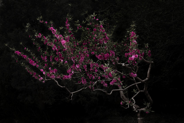 , 'Peach Tree,' 2016, Flowers