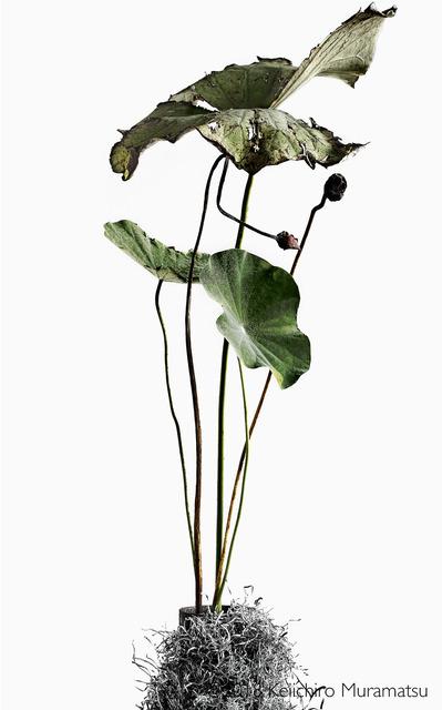 , 'Lotus 8,' 2018, Galerie Marie-Robin