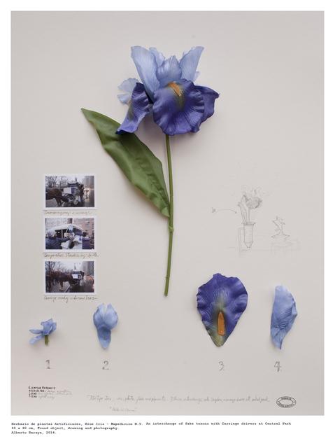 , 'Orquidea Tequendama - Herbario de Plantas Artificiales,' 2014, Instituto de Visión