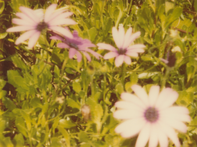 , 'Artificial Flowers II,' 1999, Instantdreams