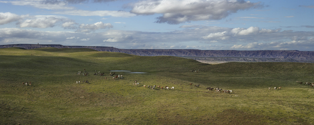 , 'Badland Ponies, Shannon County, South Dakota,' 2014, Kopeikin Gallery