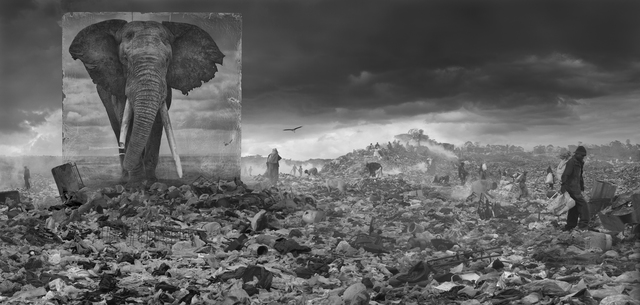 Nick Brandt, 'Wasteland with Elephant', 2015, Photography, Archival Pigment Print, Atlas Gallery