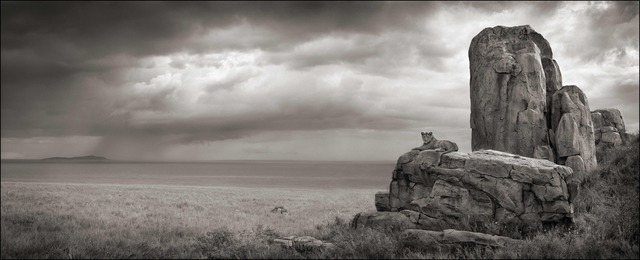 Nick Brandt, 'Lion with Monolith, Serengeti, 2008', photo-eye Gallery