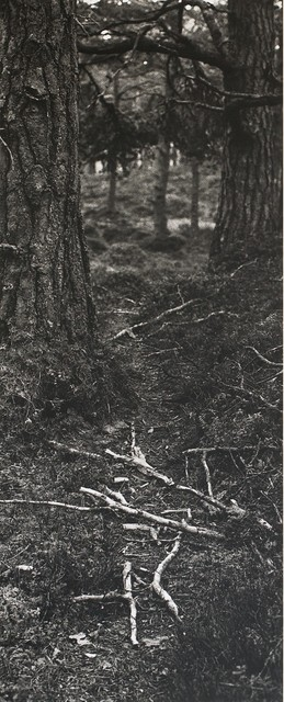 , 'Fallen Branches on a deer path,' 1985, Repetto Gallery