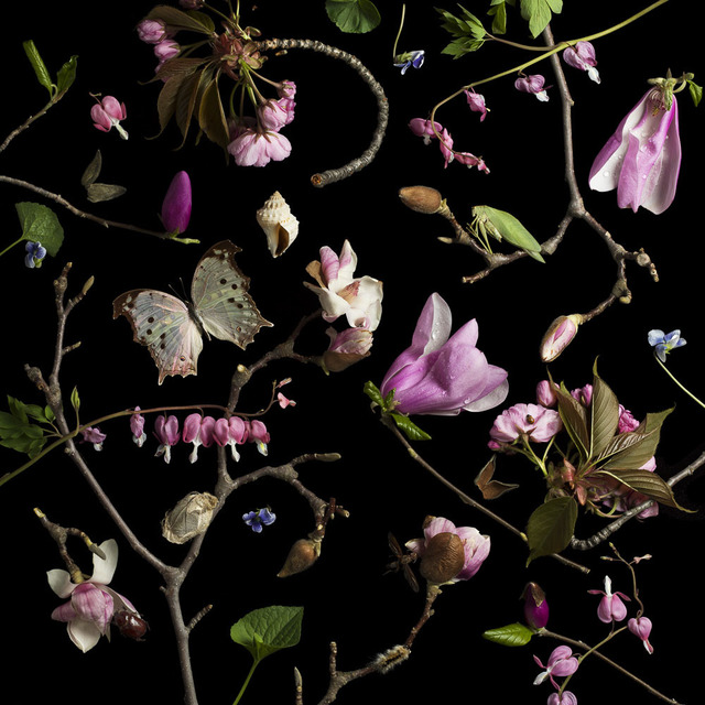 , 'Botanical III, Bleeding Hearts and Magnolias,' 2013, Snite Museum of Art