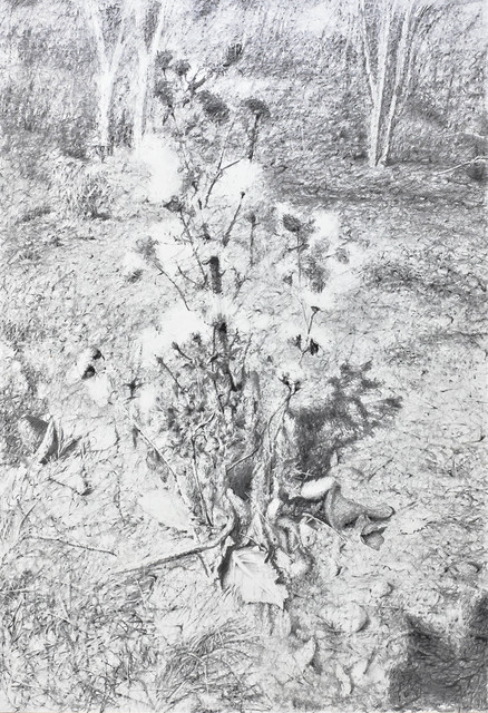 Dan Maciuca, 'Bramble', 2020, Drawing, Collage or other Work on Paper, Charcoal on archival paper, Zorzini F Gallery