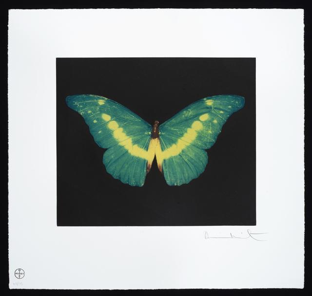 , 'Butterfly – Landscape – To Belie,' 2012, Um Galeria